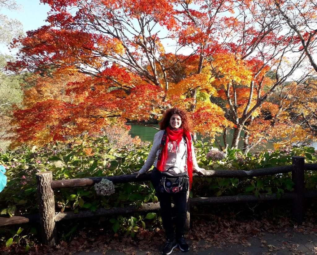 Momiji con sus hojas de color rojo