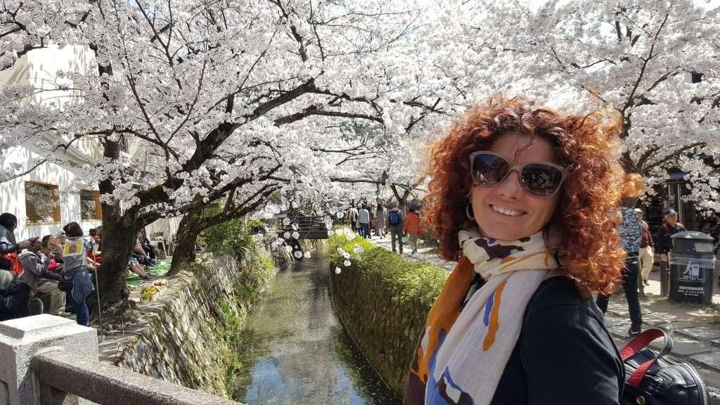 Sakura en el paseo filosófico de Kioto