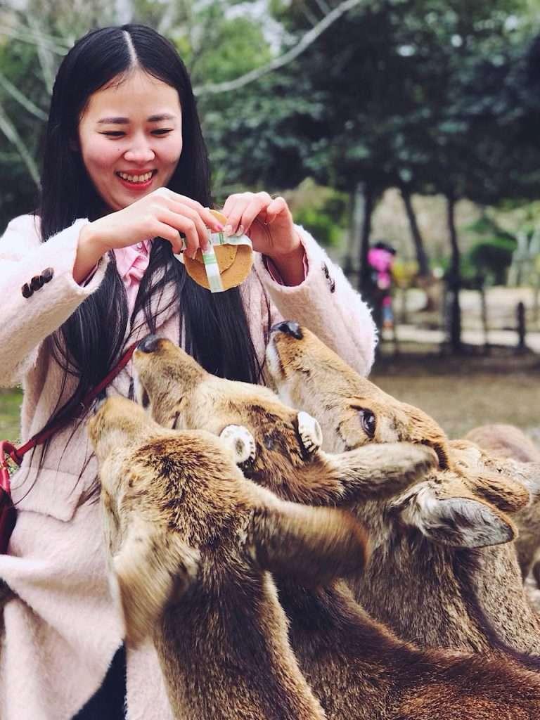 Alimentando a los ciervos del Parque Nara-Koen