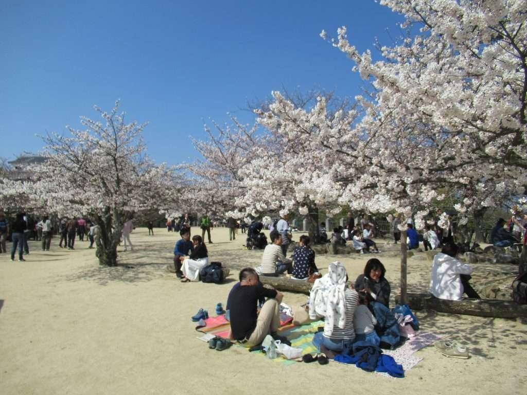 Fiesta Hanami debajo de un cerezo