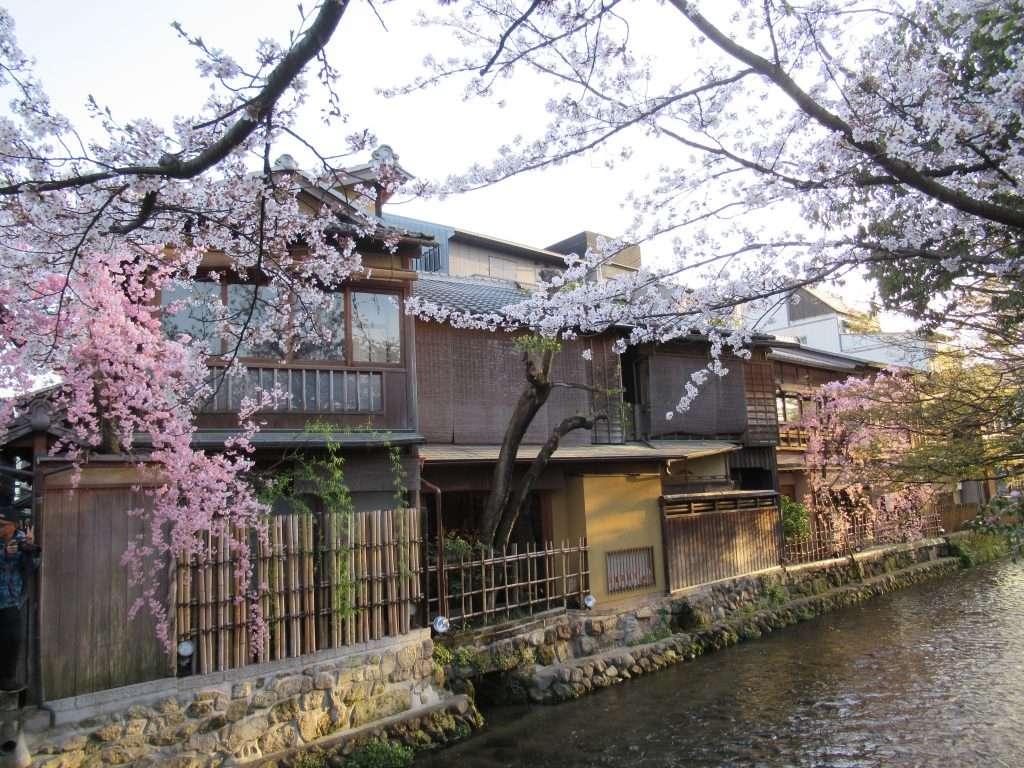 Calle Shimbasi en época de sakura