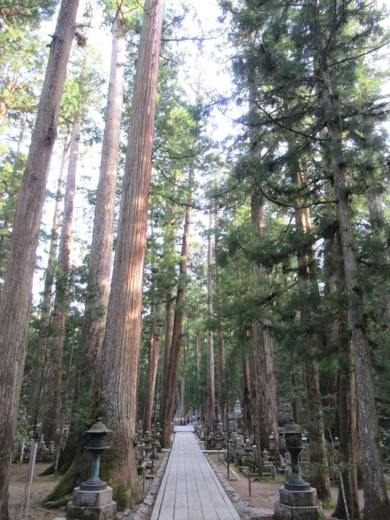 Cementerio Okuno-in, cedros con más de 500 años de antigüedad