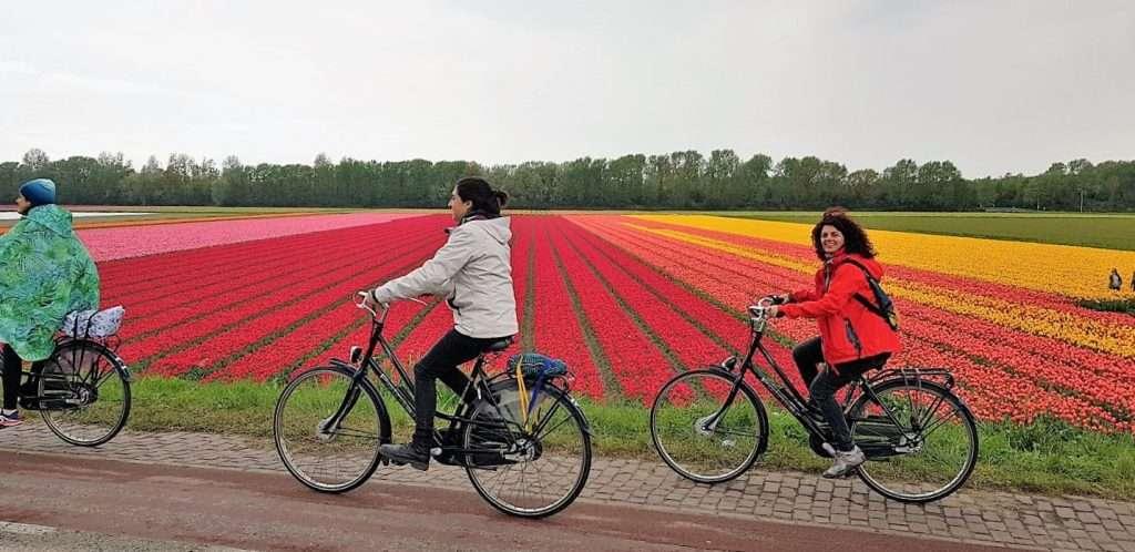Camino a Haarlem en bicicleta