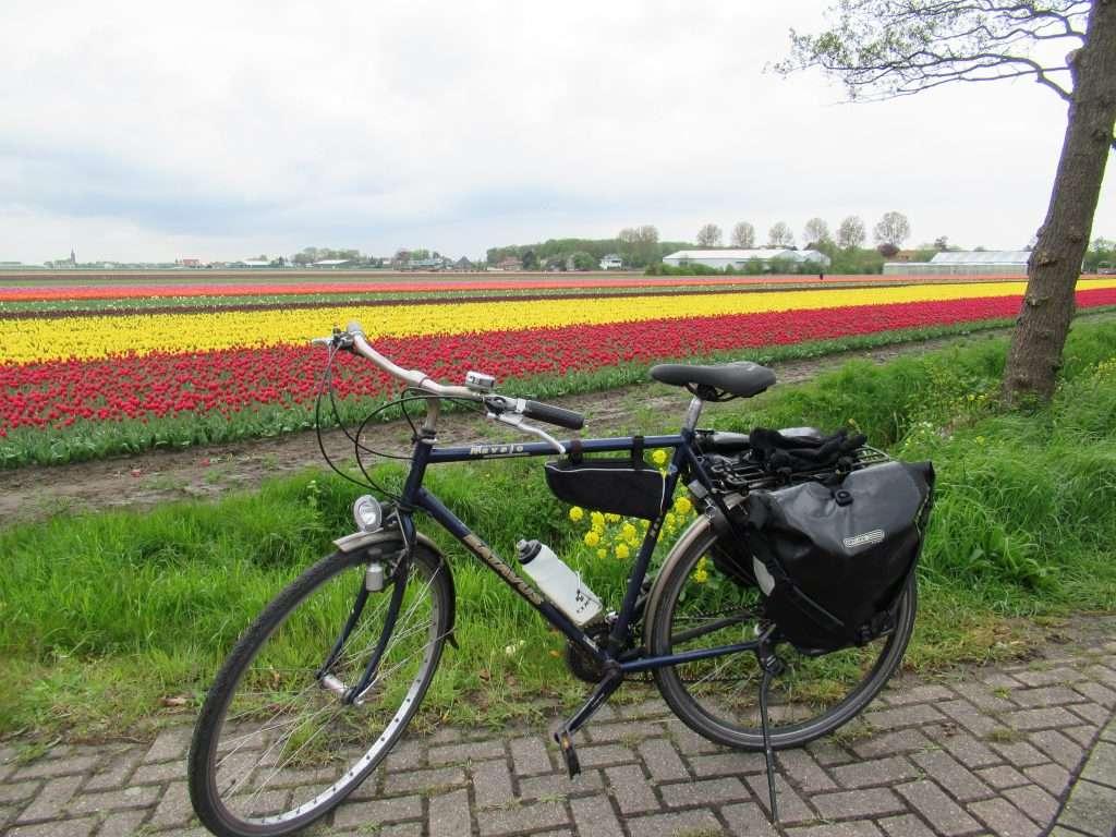 Campos de tulipanes por N226