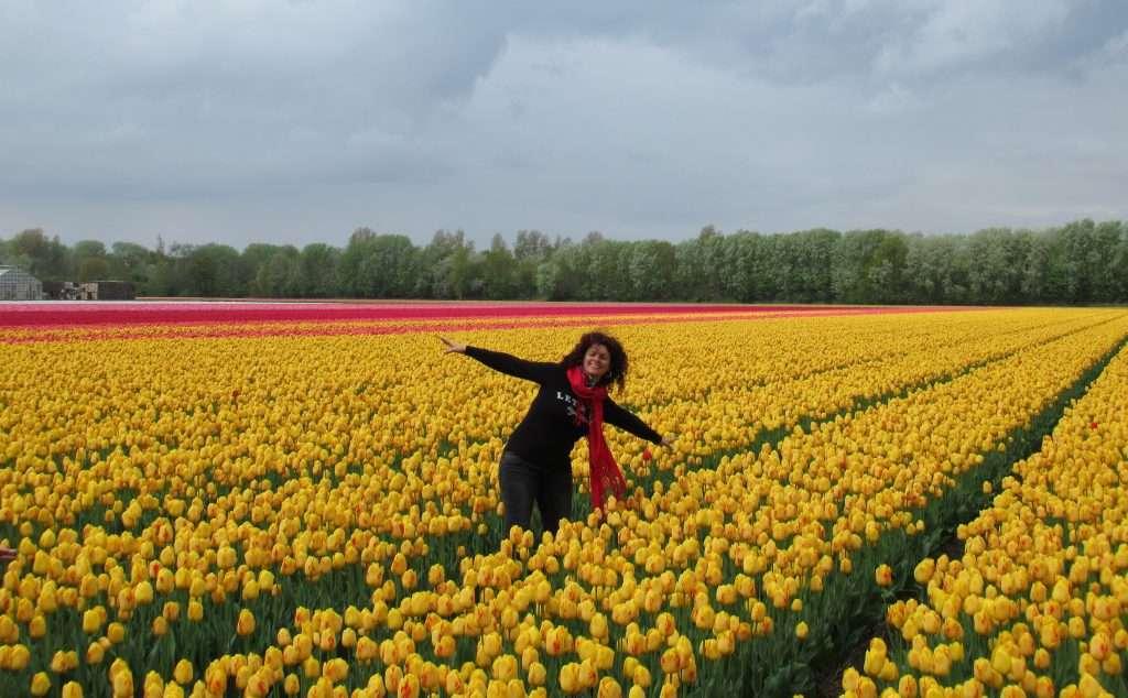Campos de Tulipanes en N208