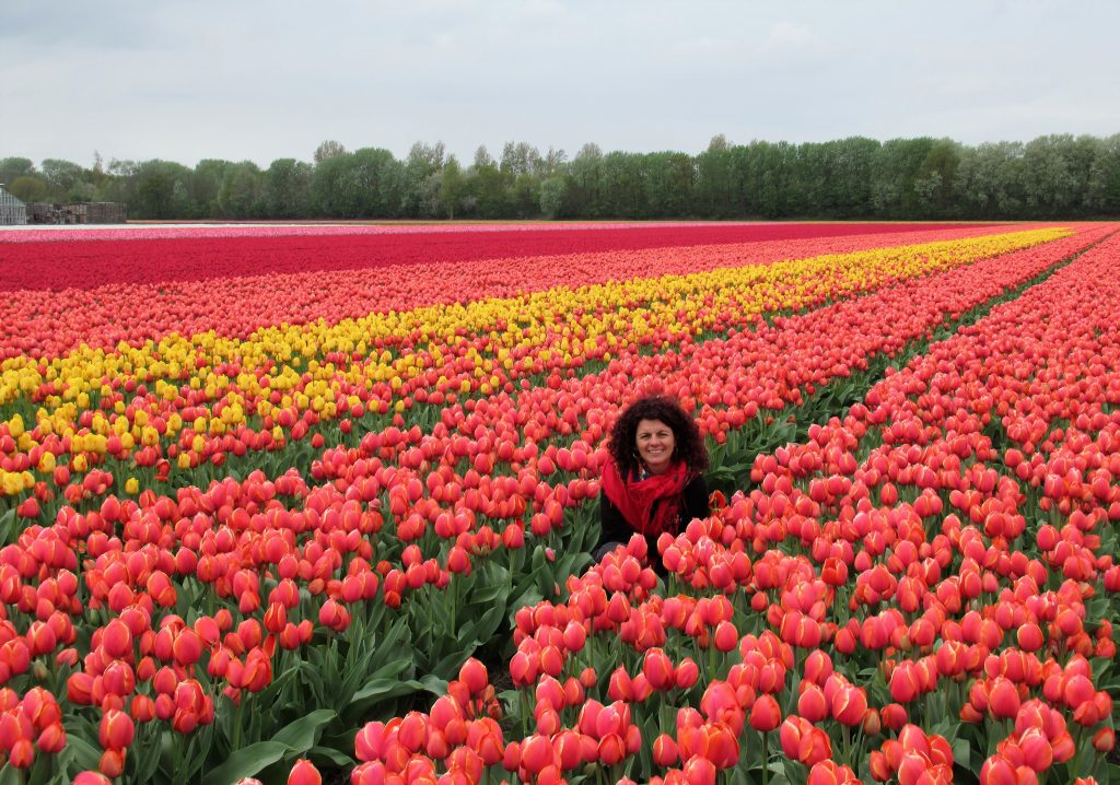 Escondida en medio de los Tulipanes en la N226