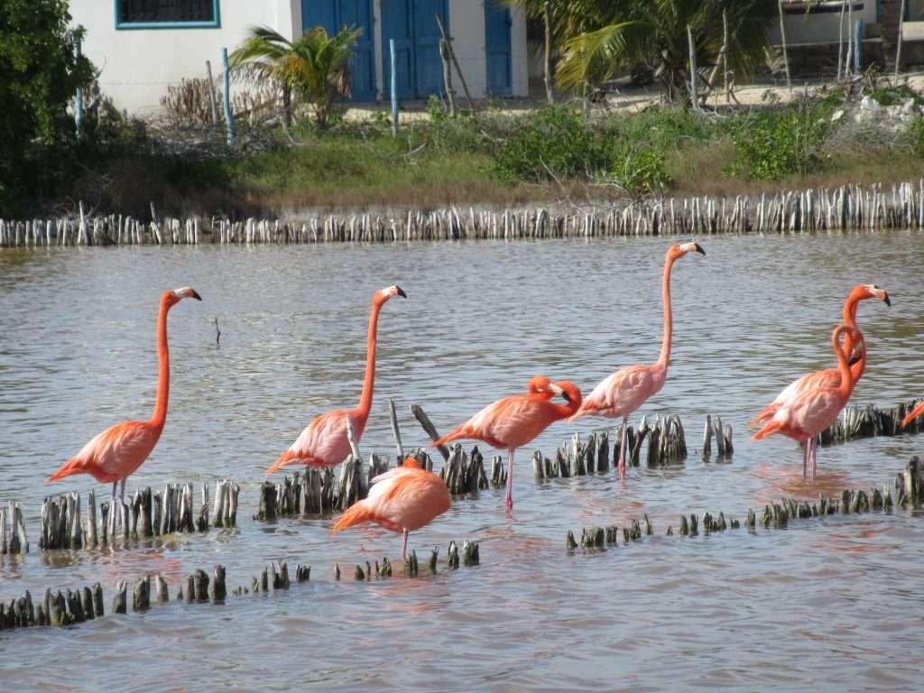 Flamencos en Yucatán