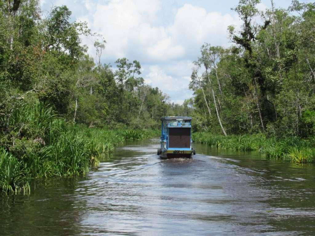 Klotok por los canales de Tanjung Puting